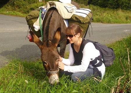 Donkey Walking Wicklow